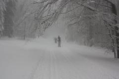 Baerenfangweg-im-Nebel